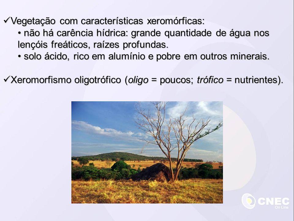 Vegetação com características xeromórficas: Vegetação com características xeromórficas: não há carência hídrica: grande quantidade de água nos lençóis freáticos, raízes profundas.