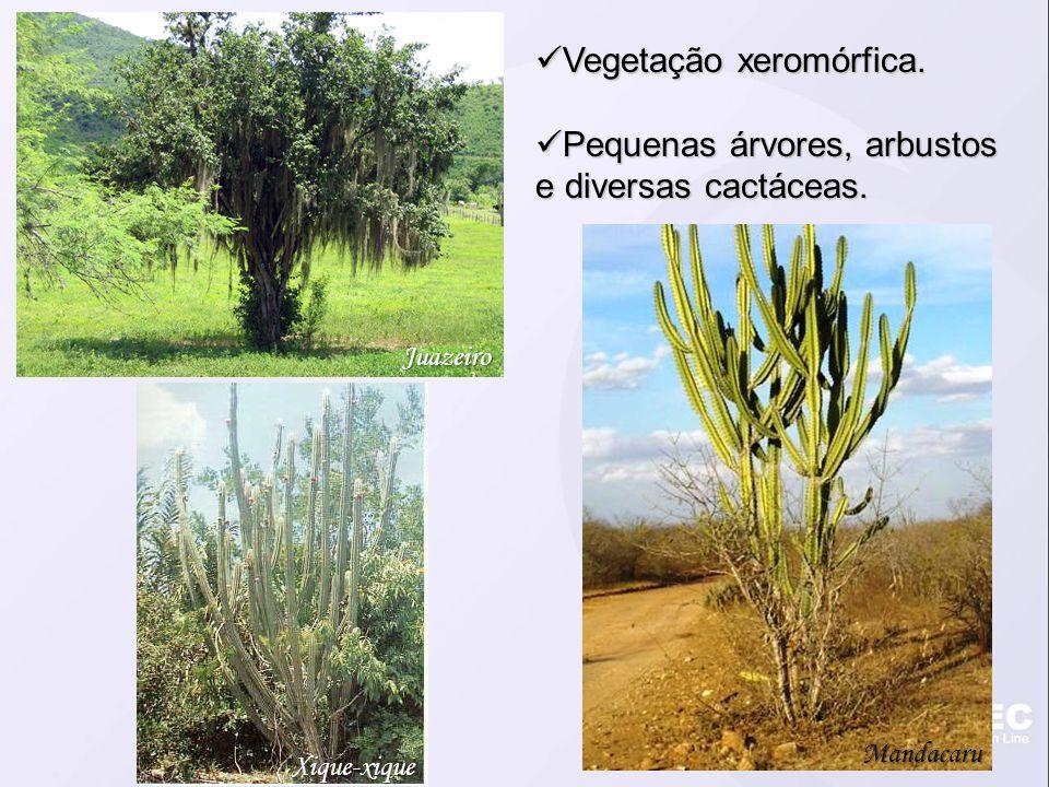 Vegetação xeromórfica.Vegetação xeromórfica. Pequenas árvores, arbustos e diversas cactáceas.