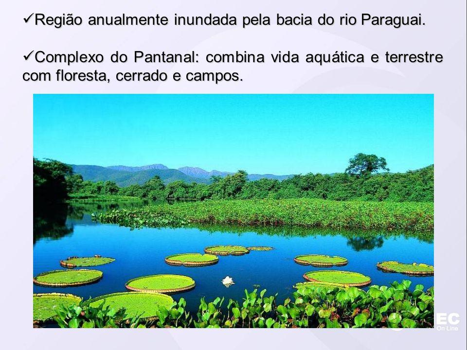 Região anualmente inundada pela bacia do rio Paraguai. Região anualmente inundada pela bacia do rio Paraguai. Complexo do Pantanal: combina vida aquát