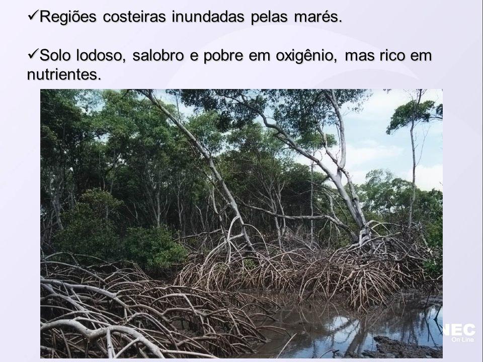 Regiões costeiras inundadas pelas marés. Regiões costeiras inundadas pelas marés. Solo lodoso, salobro e pobre em oxigênio, mas rico em nutrientes. So