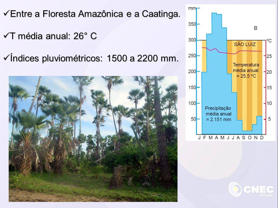 Entre a Floresta Amazônica e a Caatinga. Entre a Floresta Amazônica e a Caatinga. T média anual: 26° C T média anual: 26° C Índices pluviométricos: 15
