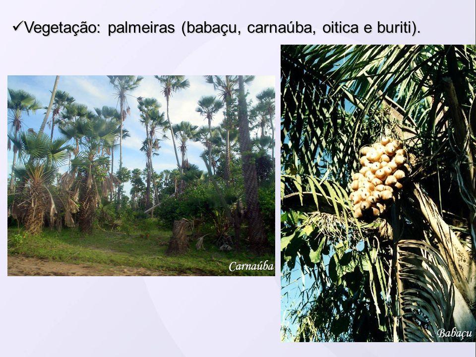 Vegetação: palmeiras (babaçu, carnaúba, oitica e buriti). Vegetação: palmeiras (babaçu, carnaúba, oitica e buriti). Carnaúba Babaçu