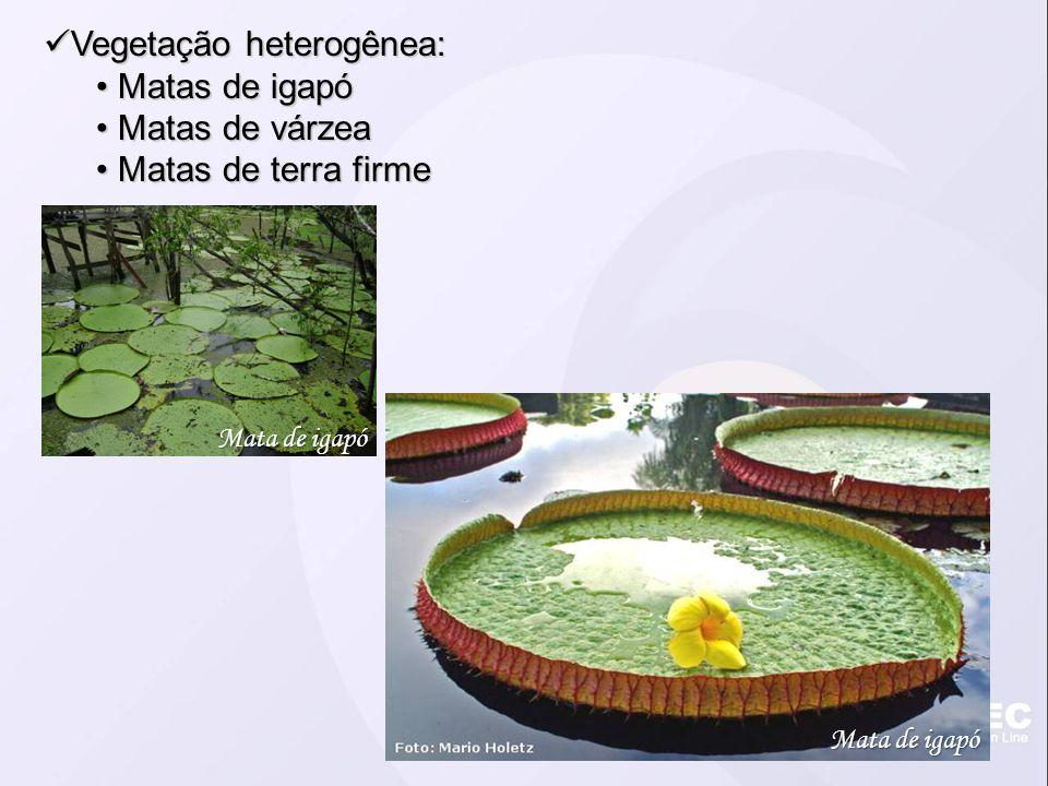 Vegetação heterogênea: Vegetação heterogênea: Matas de igapó Matas de igapó Matas de várzea Matas de várzea Matas de terra firme Matas de terra firme