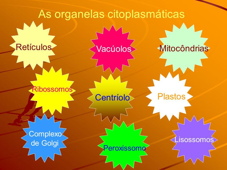 As organelas citoplasmáticas Vacúolos Mitocôndrias Plastos Lisossomos Peroxissomo Complexo de Golgi Centríolo Ribossomos Retículos