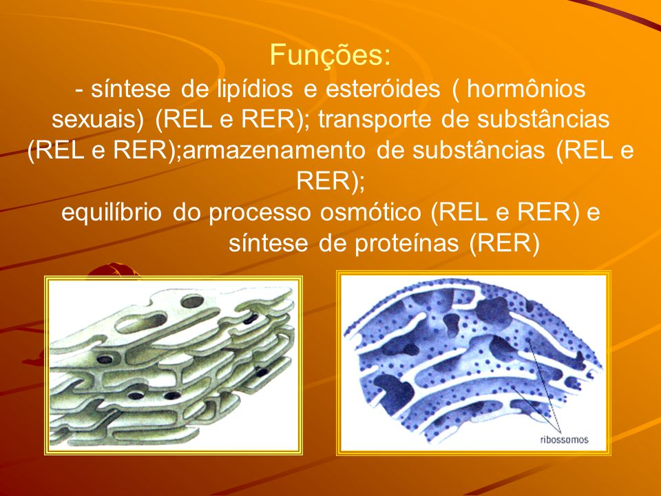 Funções: - síntese de lipídios e esteróides ( hormônios sexuais) (REL e RER); transporte de substâncias (REL e RER);armazenamento de substâncias (REL e RER); equilíbrio do processo osmótico (REL e RER) e síntese de proteínas (RER)