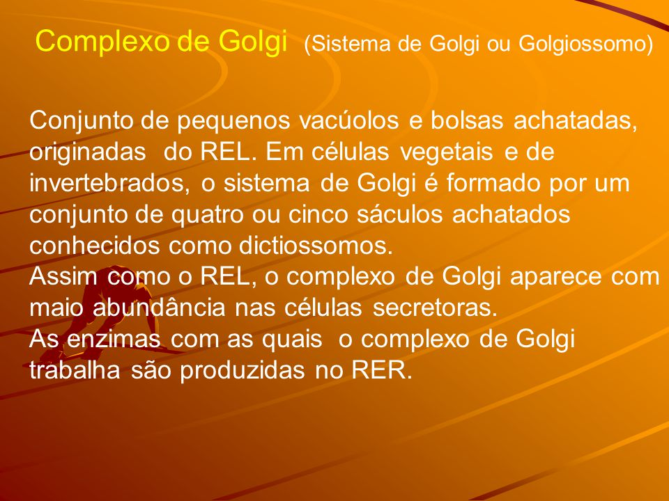 Complexo de Golgi (Sistema de Golgi ou Golgiossomo) Conjunto de pequenos vacúolos e bolsas achatadas, originadas do REL. Em células vegetais e de inve