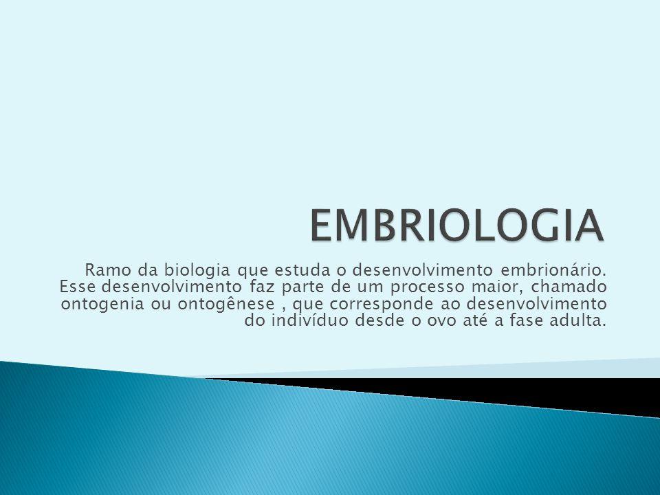 Ramo da biologia que estuda o desenvolvimento embrionário. Esse desenvolvimento faz parte de um processo maior, chamado ontogenia ou ontogênese, que c