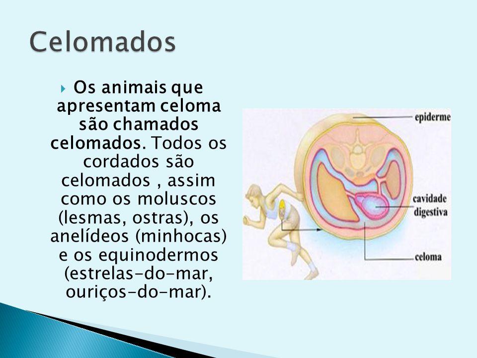 Há animais triblásticos em que a mesoderma delimita uma parte da cavidade, sendo a outra parte delimitada pela endoderma.