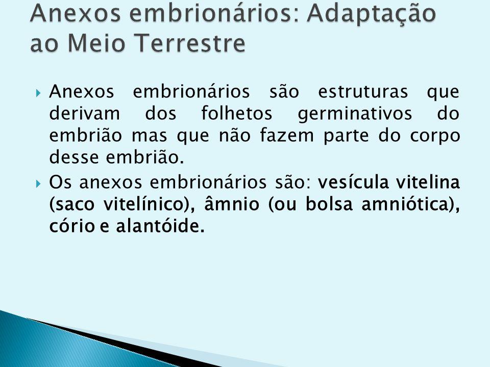 Anexos embrionários são estruturas que derivam dos folhetos germinativos do embrião mas que não fazem parte do corpo desse embrião. Os anexos embrioná