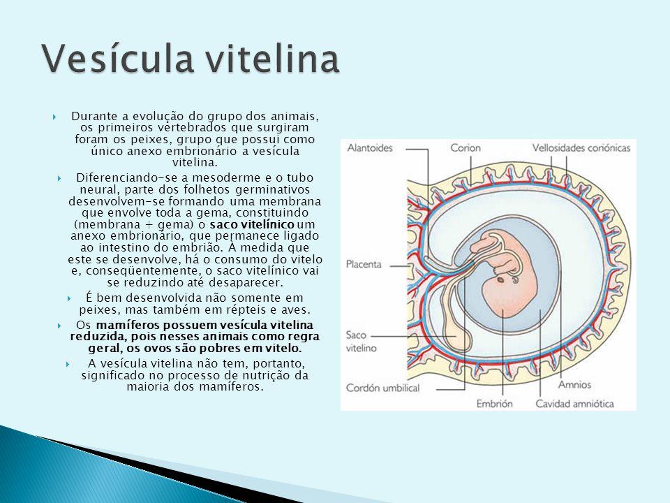 O âmnio é uma membrana que envolve completamente o embrião, delimitando uma cavidade denominada cavidade amniótica.