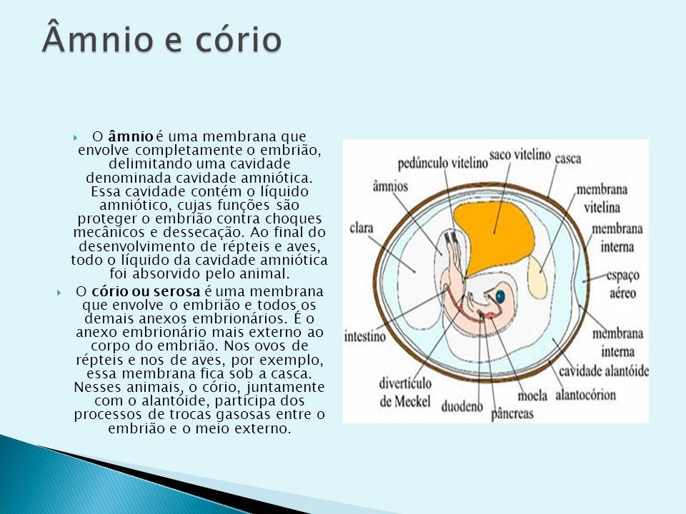 O âmnio é uma membrana que envolve completamente o embrião, delimitando uma cavidade denominada cavidade amniótica. Essa cavidade contém o líquido amn