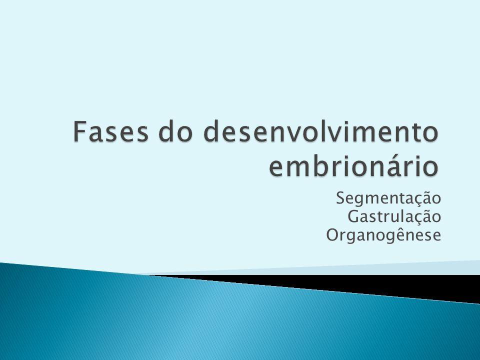 Segmentação Gastrulação Organogênese