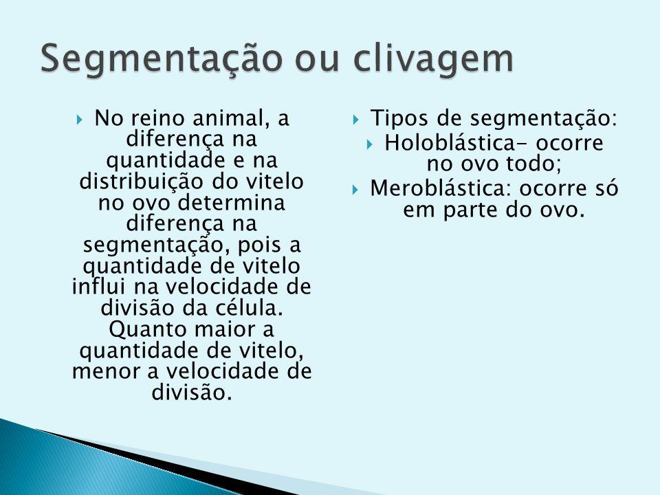 No reino animal, a diferença na quantidade e na distribuição do vitelo no ovo determina diferença na segmentação, pois a quantidade de vitelo influi n