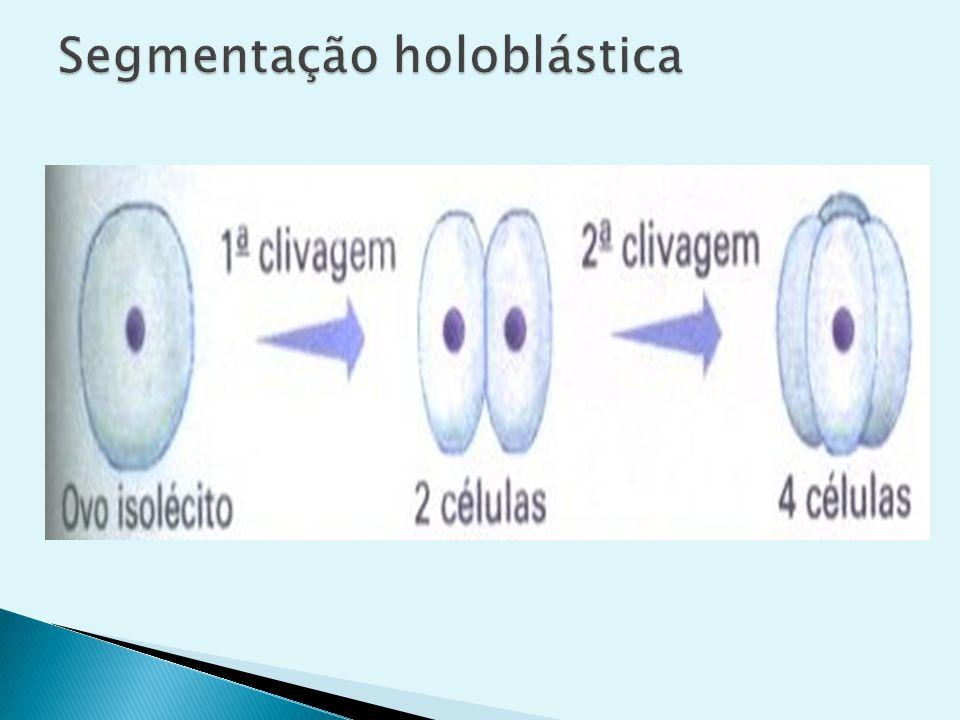 Ocorre nos ovos alécitos, isolécitos e heterolécitos.