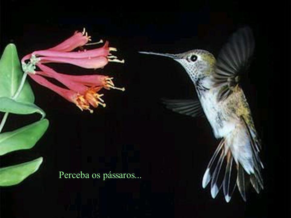 Perceba os detalhes... Sinta o perfume das flores...