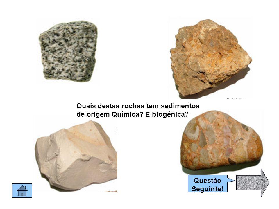 Rochas Sedimentares Como sabes as rochas sedimentares, são constituídas por sedimentos de várias origens : de outras rochas e até de restos de animais.