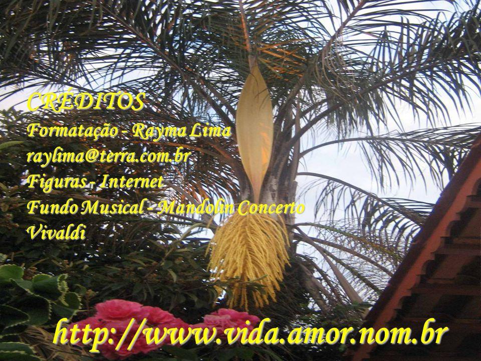 CRÉDITOS Formatação - Rayma Lima raylima@terra.com.br Figuras - Internet Fundo Musical - Mandolin Concerto Vivaldi http://www.vida.amor.nom.br