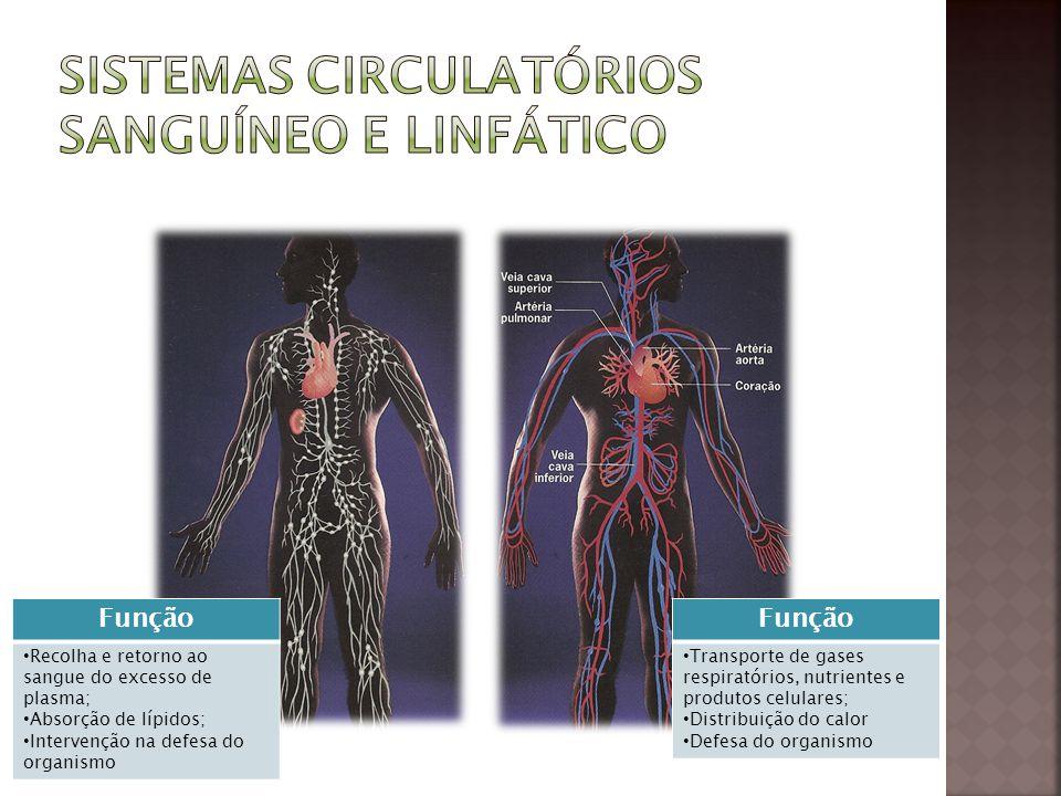 Função Transporte de gases respiratórios, nutrientes e produtos celulares; Distribuição do calor Defesa do organismo Função Recolha e retorno ao sangu