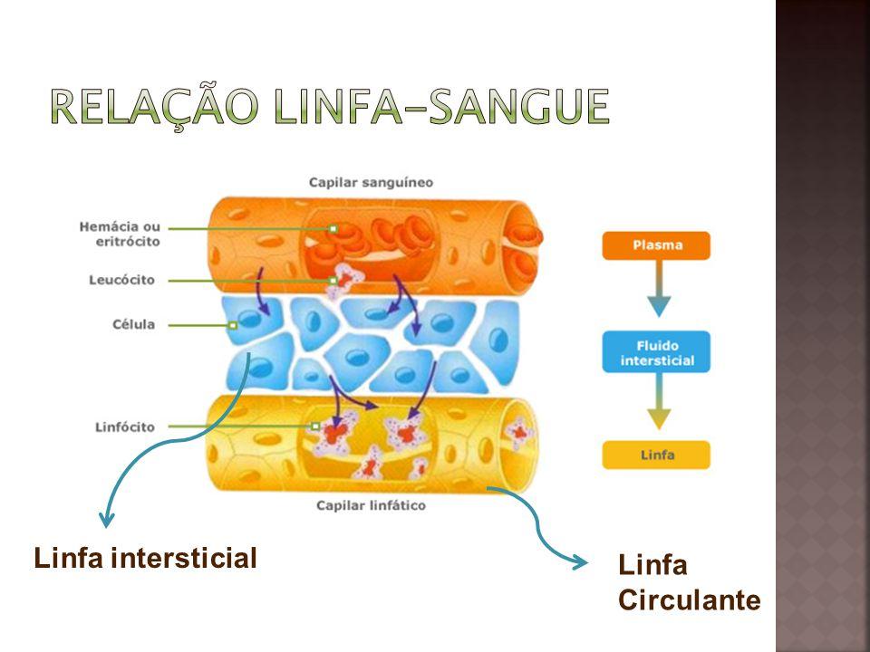 Linfa intersticial Linfa Circulante