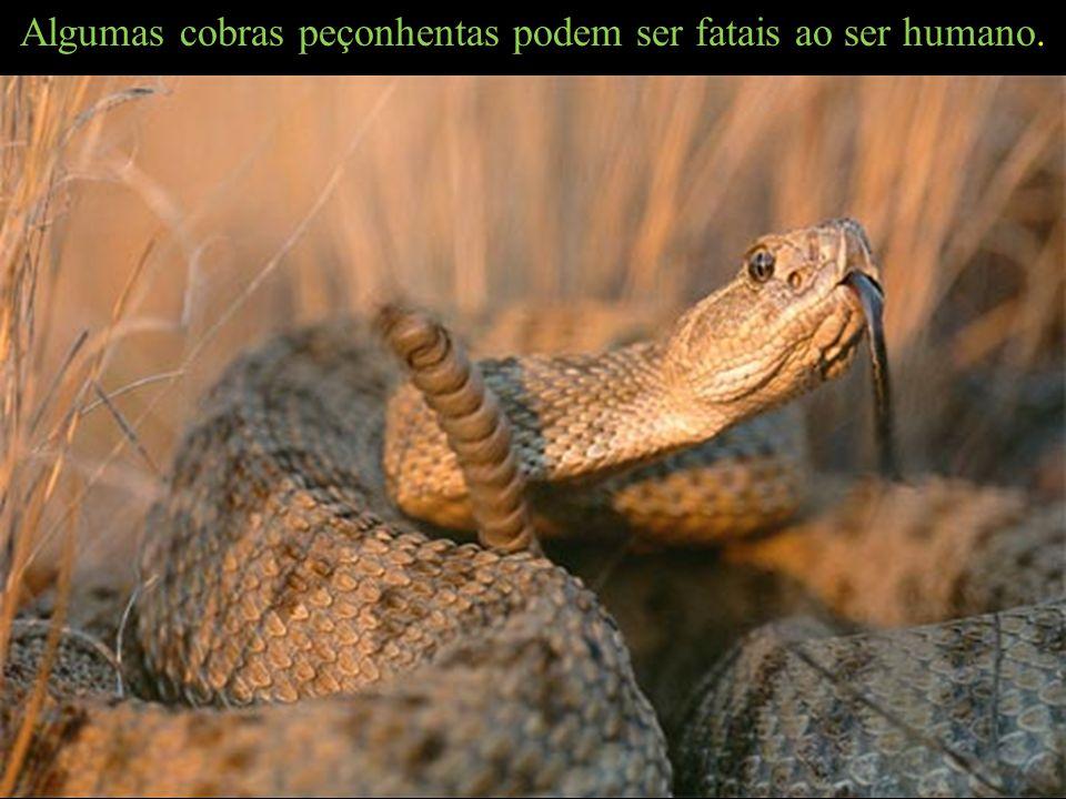 Algumas cobras peçonhentas podem ser fatais ao ser humano.