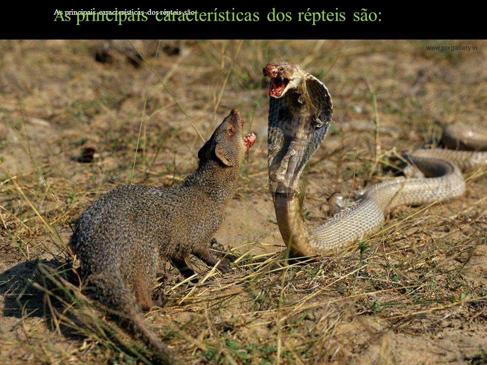 Subordem Ophidia: com o corpo alongado, sem pata, bexiga urinária e tímpano.