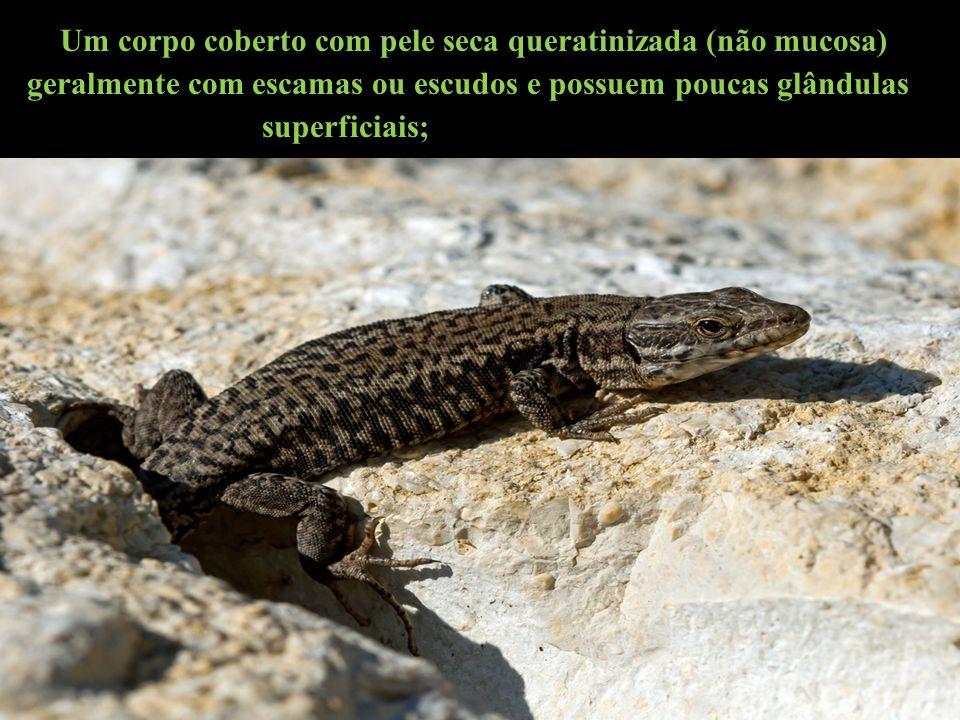 Seu corpo é revestido por escamas (no escamados); placas córneas (nos crocodilianos) e carapaça (nos quelônios);