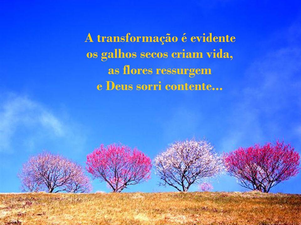 A transformação é evidente os galhos secos criam vida, as flores ressurgem e Deus sorri contente...