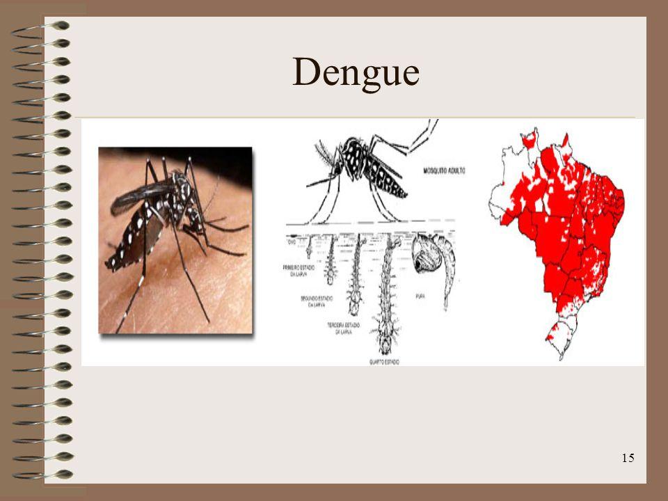 15 Dengue