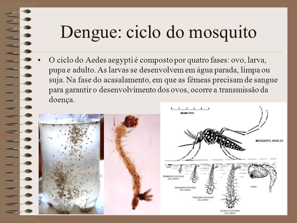 24 Dengue: ciclo do mosquito O ciclo do Aedes aegypti é composto por quatro fases: ovo, larva, pupa e adulto.