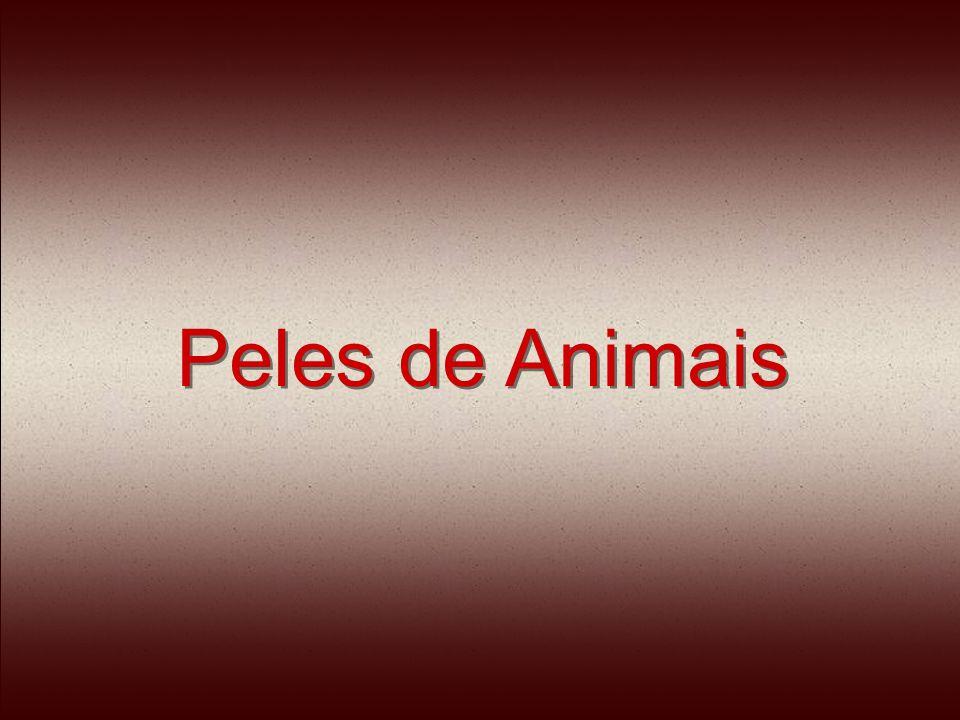Os animais passam a vida dentro de pequenas gaiolas, sem a mínima condição de higiene.