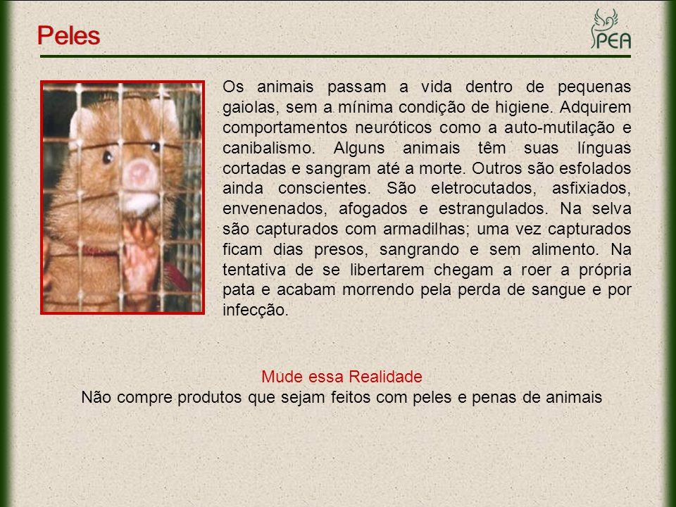 Os animais passam a vida dentro de pequenas gaiolas, sem a mínima condição de higiene. Adquirem comportamentos neuróticos como a auto-mutilação e cani