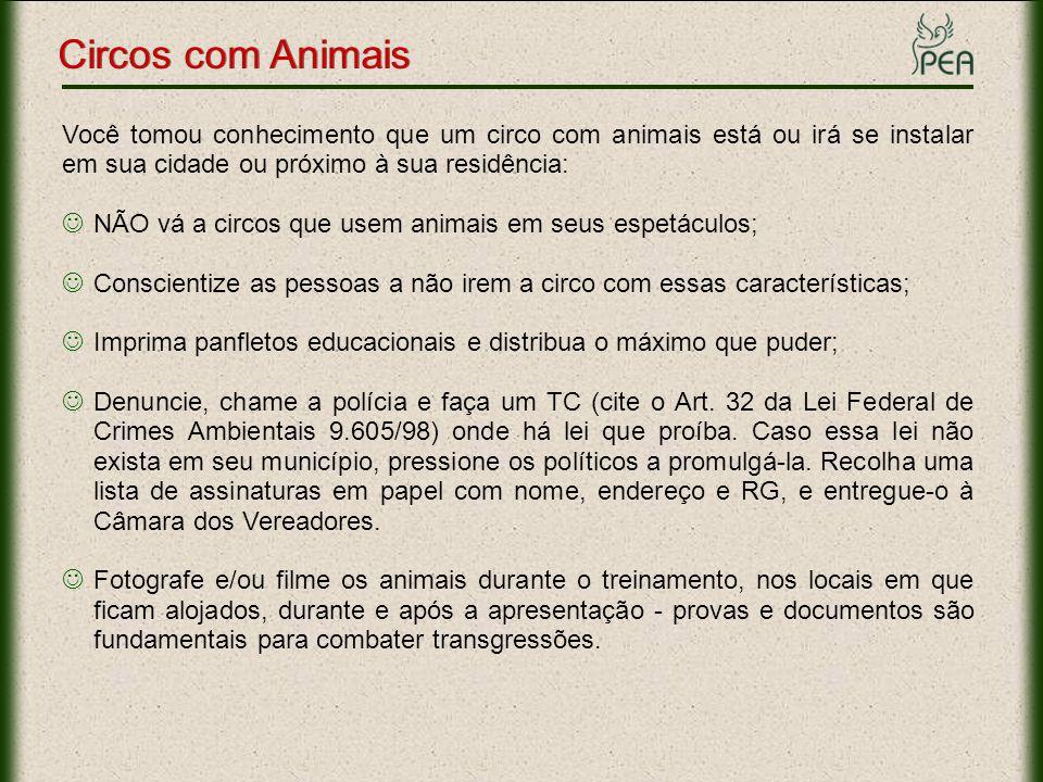 Você tomou conhecimento que um circo com animais está ou irá se instalar em sua cidade ou próximo à sua residência: NÃO vá a circos que usem animais e