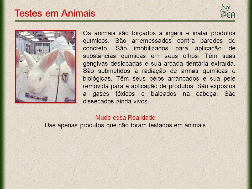 Os animais são forçados a ingerir e inalar produtos químicos. São arremessados contra paredes de concreto. São imobilizados para aplicação de substânc