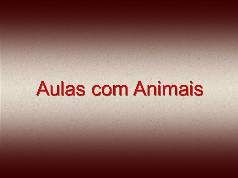 Aulas com Animais