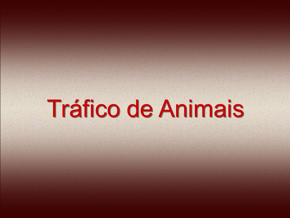 Normalmente, os animais vêm socados dentro de caixas de sapato, malas, latas de alimento, gaiolas e caixotes.