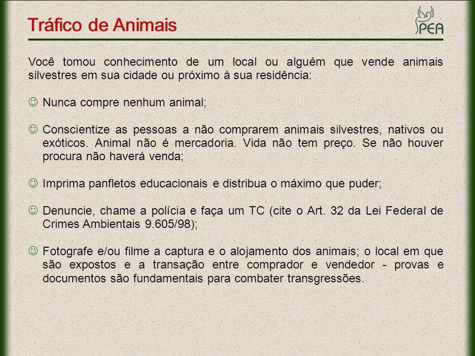 Tráfico de Animais Links Importantes Informações: www.pea.org.br/crueldade/trafico/index.htmwww.pea.org.br/crueldade/trafico/index.htm Fotos: www.pea.org.br/crueldade/trafico/fotos.htmwww.pea.org.br/crueldade/trafico/fotos.htm Relatório da Polícia Militar Ambiental do Estado de São Paulo: www.pea.org.br/educativo/relatorio_policia_ambiental.pdf