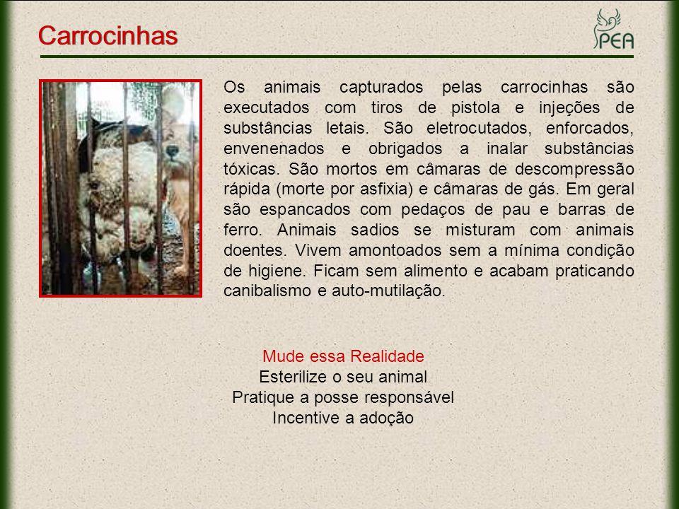 Os animais capturados pelas carrocinhas são executados com tiros de pistola e injeções de substâncias letais. São eletrocutados, enforcados, envenenad