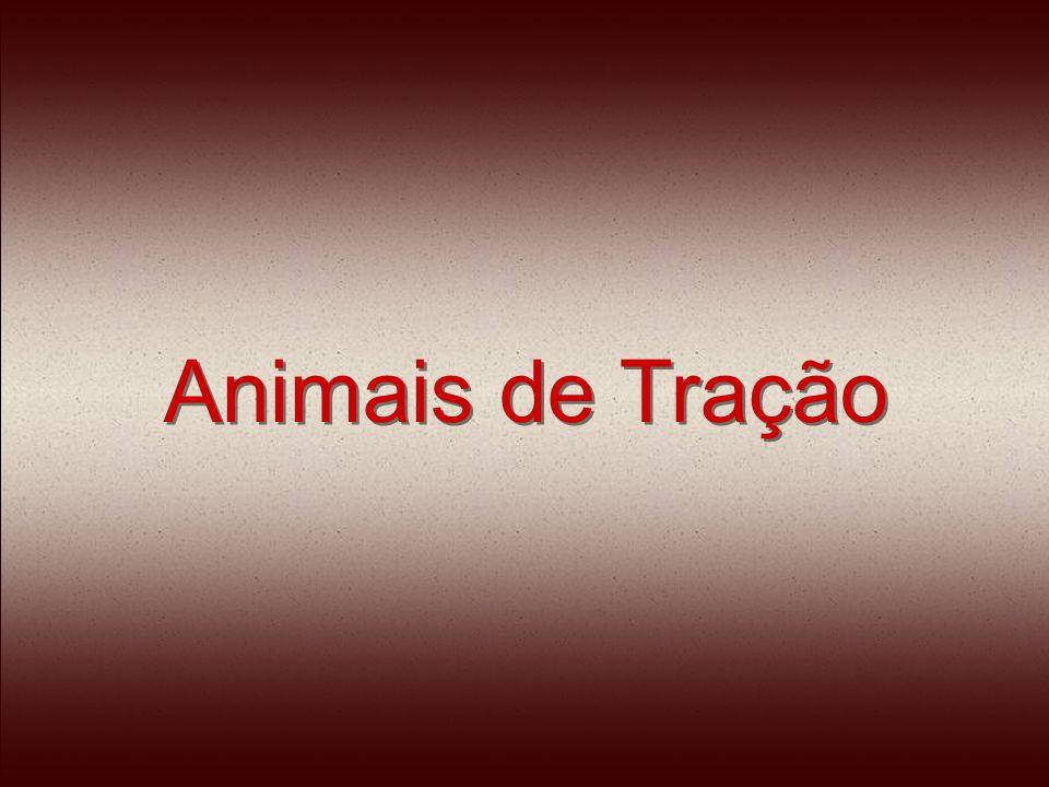 Os animais usados para tração são mal alimentados, mal ferrados, não recebem atendimento veterinário.