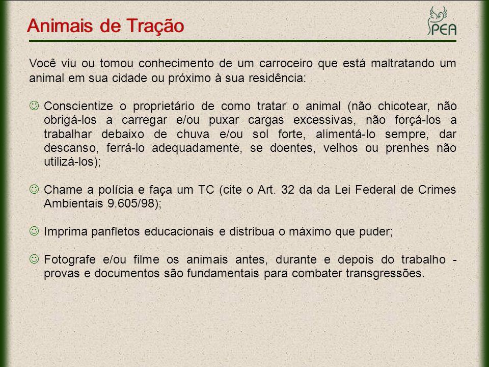 Animais de Tração Links Importantes Informações: www.pea.org.br/crueldade/tracao/index.htmwww.pea.org.br/crueldade/tracao/index.htm Fotos: www.pea.org.br/crueldade/tracao/fotos.htmwww.pea.org.br/crueldade/tracao/fotos.htm Slide: www.pea.org.br/educativo/slides/tracao.ppswww.pea.org.br/educativo/slides/tracao.pps