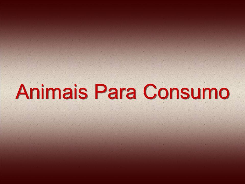 Animais para Consumo Os Bovinos e eqüinos recebem um tiro de pistola pneumática, choques elétricos e golpes de marreta na cabeça.