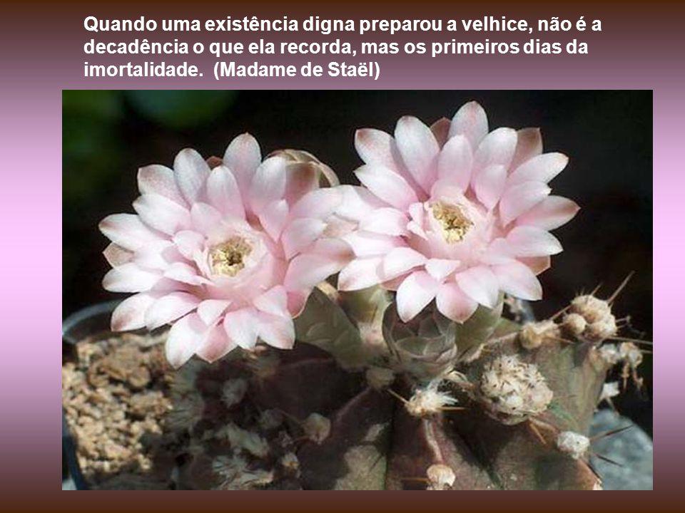 A dor é bela sim. Para você ver, é tão bela que aqui em Minas Gerais se cultua mais a paixão de Cristo do que a ressurreição. (Adélia Prado)