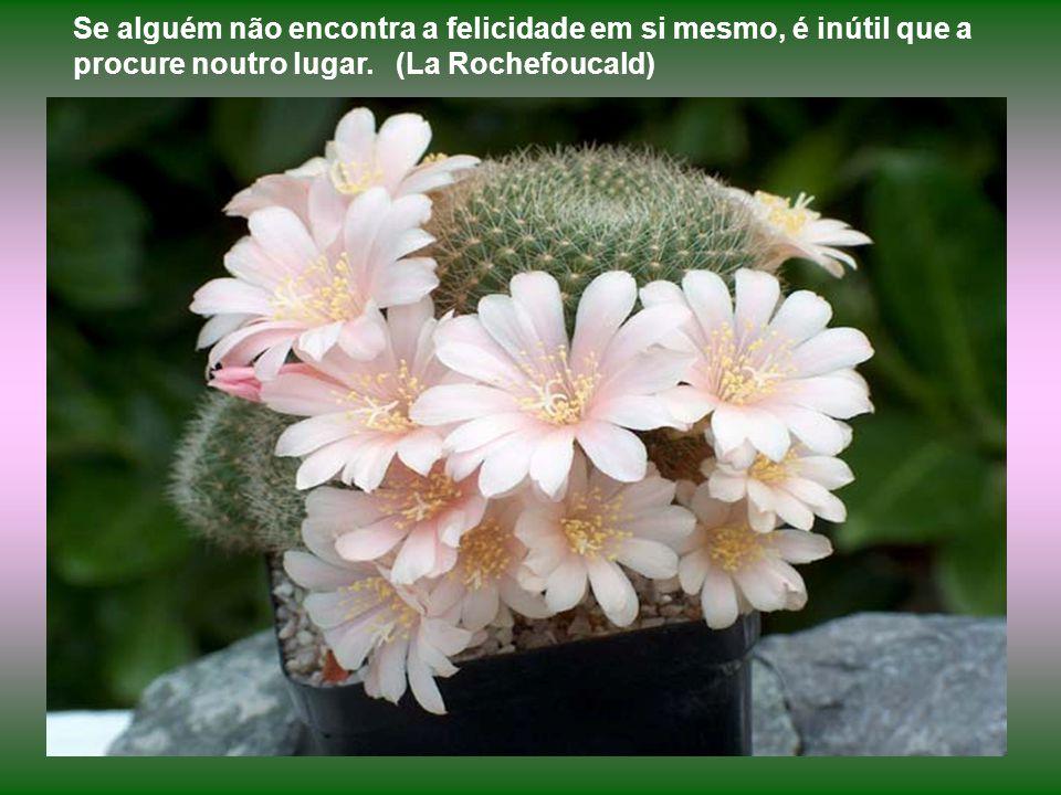 A Natureza está sempre a enviar mensagens sobre a vida. O homem persiste em não ouvi-la. O cactus, por exemplo, na aspereza de sua forma externa, espi