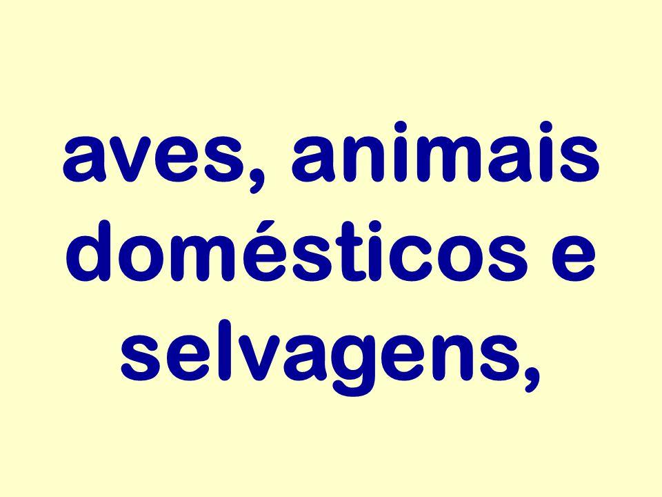 aves, animais domésticos e selvagens,