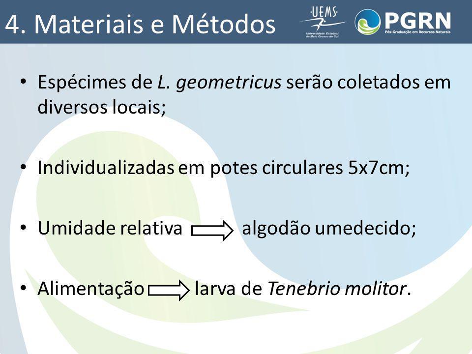 4. Materiais e Métodos Espécimes de L. geometricus serão coletados em diversos locais; Individualizadas em potes circulares 5x7cm; Umidade relativa al