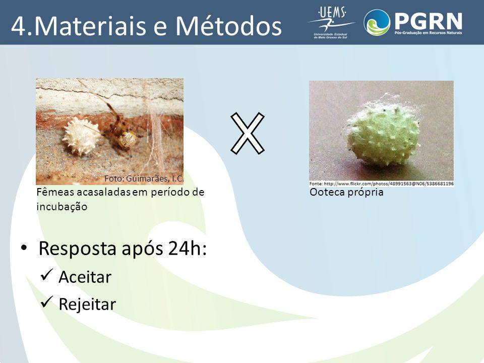 4.Materiais e Métodos Resposta após 24h: Aceitar Rejeitar Fêmeas acasaladas em período de incubação Ooteca própria Foto: Guimarães, I.C.