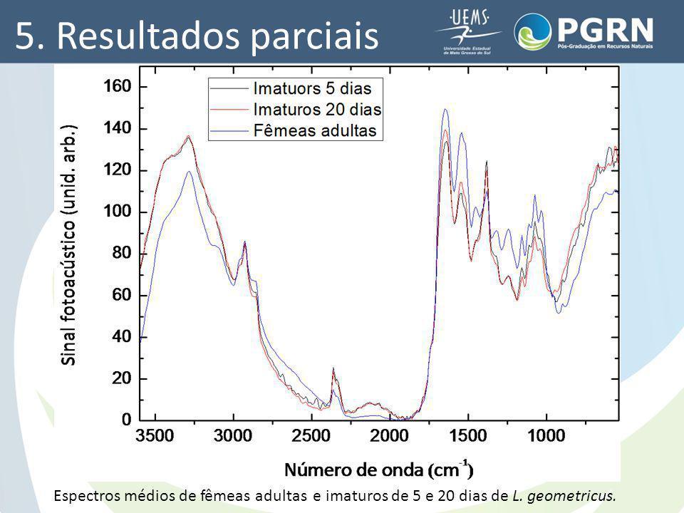 5. Resultados parciais Espectros médios de fêmeas adultas e imaturos de 5 e 20 dias de L. geometricus.