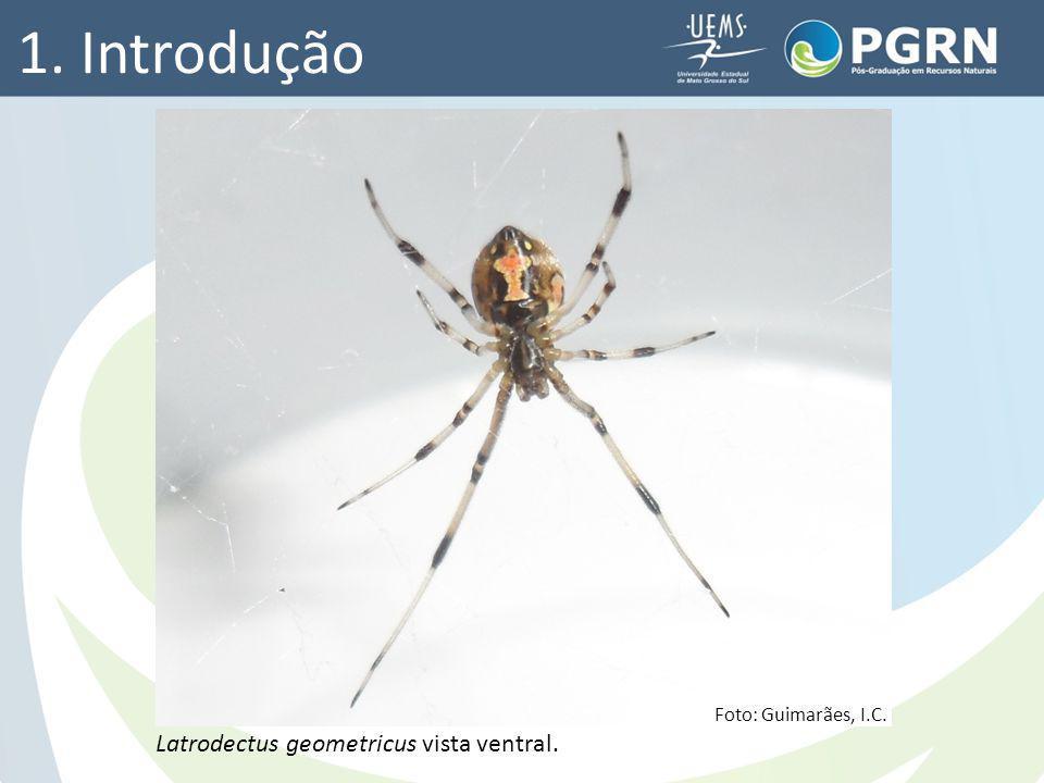 Foto: Guimarães, I.C. Latrodectus geometricus vista ventral. 1. Introdução