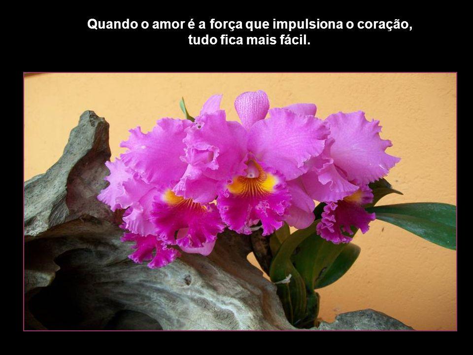 Quando o amor é a força que impulsiona o coração, tudo fica mais fácil.