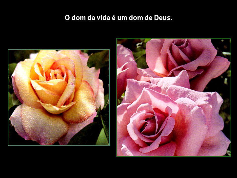 O dom da vida é um dom de Deus.