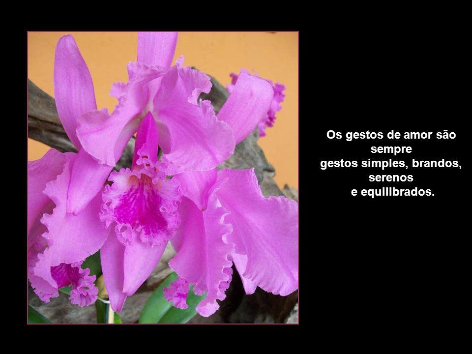 Os gestos de amor são sempre gestos simples, brandos, serenos e equilibrados.